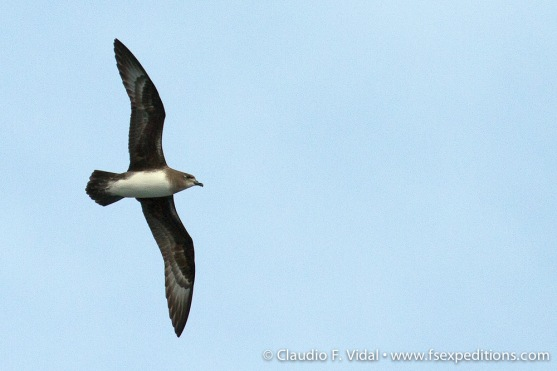 easter-island-pelagics-5