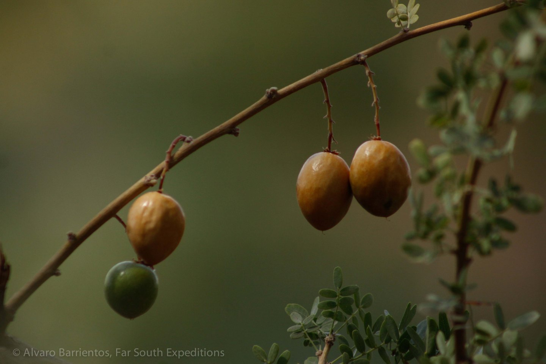 FOTO EDITADA-11